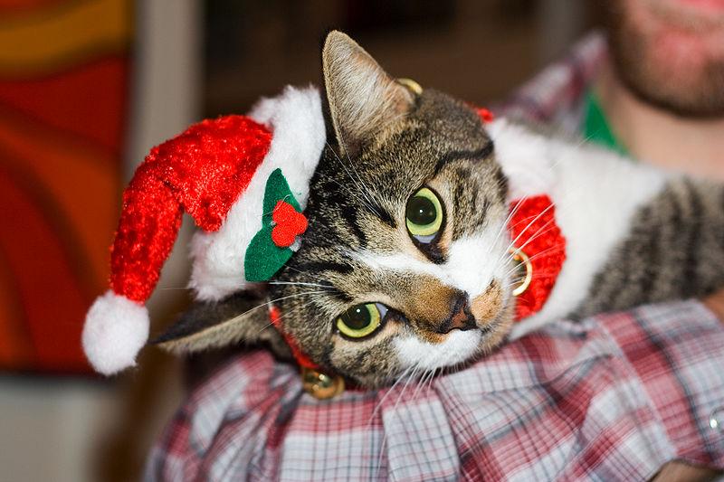 cats at christmas
